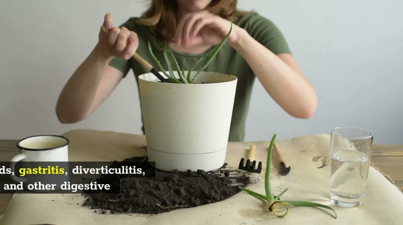 The Miracle Plant For  Fixing Just About Everything