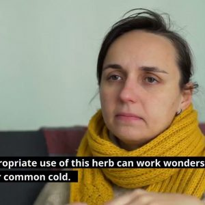 The #3 Herb You Need to stop a cold or flu in it's tracks